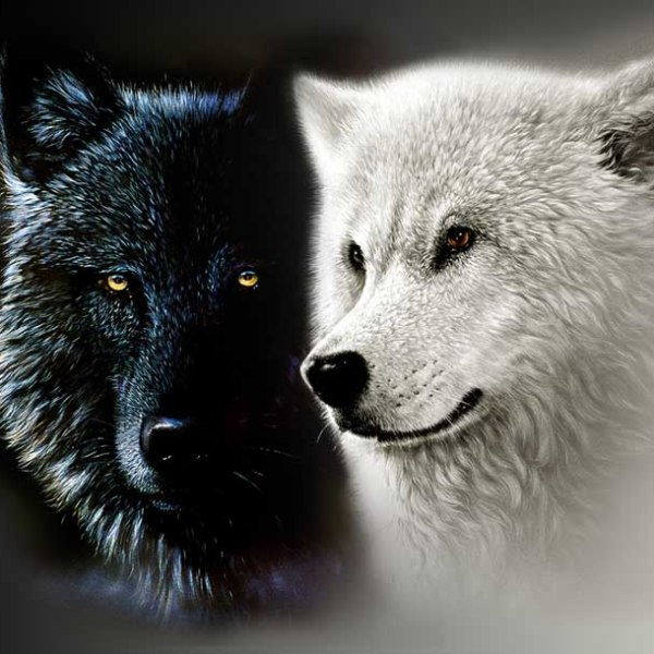 The Two Wolves Violent and Loving