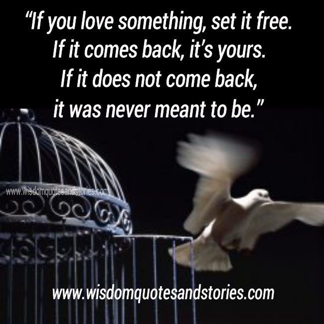 Funny Quotes If You Love Something Set It Free : If You Love Something Set It Free