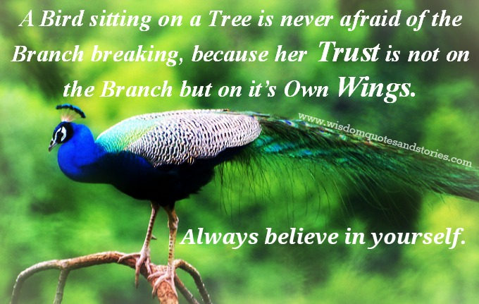 always believe in yourself like bird trusting her wings while sitting on branch of a tree