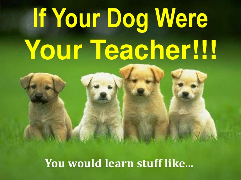 If A Dog Was Your Teacher