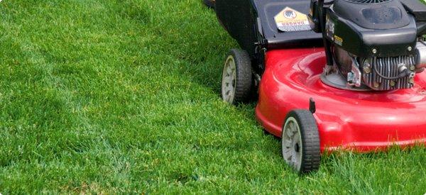 The Grass Cutting Days