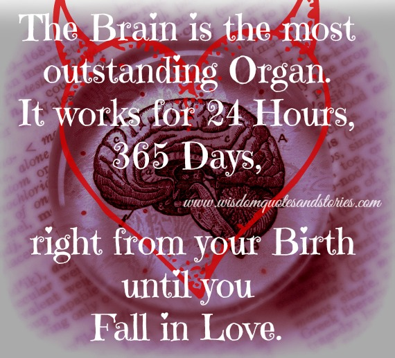 brain is the most outstanding organ until you fall in love - Wisdom Quotes and Stories