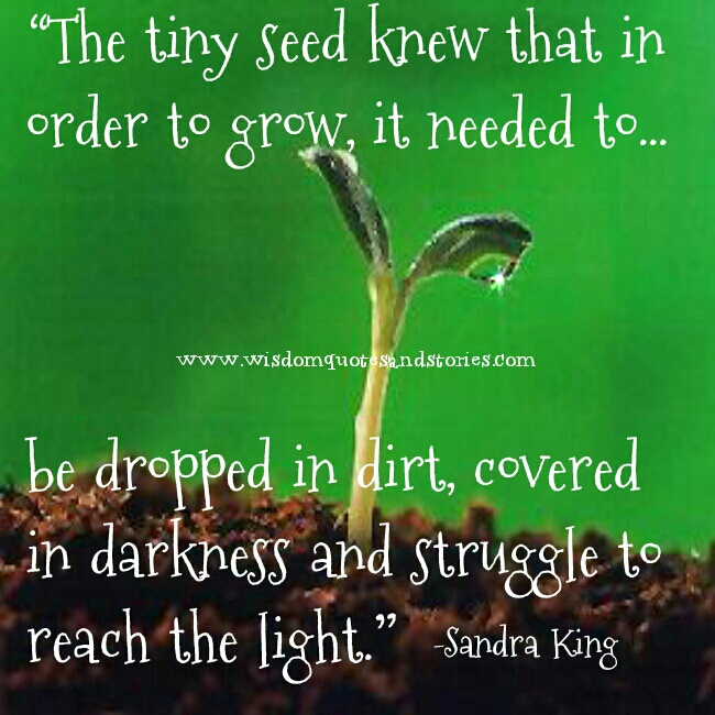 the tiny seed has to be dropped in dirt , covered in darkness and struggle to reach light in order to grow - Wisdom Quotes and Stories
