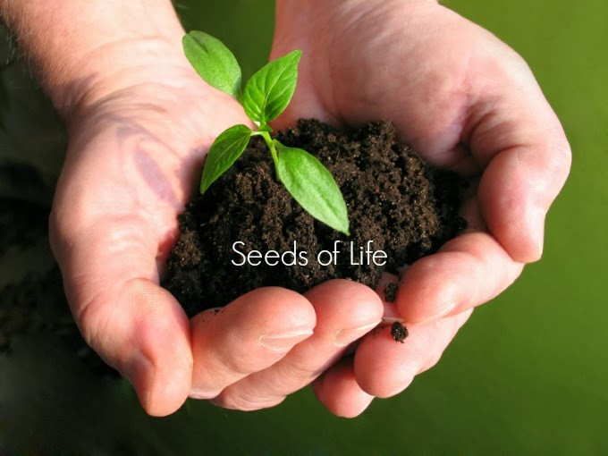 The CEO , Seeds of Life
